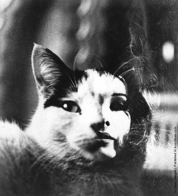 Специально разработанная обложка книги с изображением молодой девушки и кошки. (1 апреля 1965 г.)