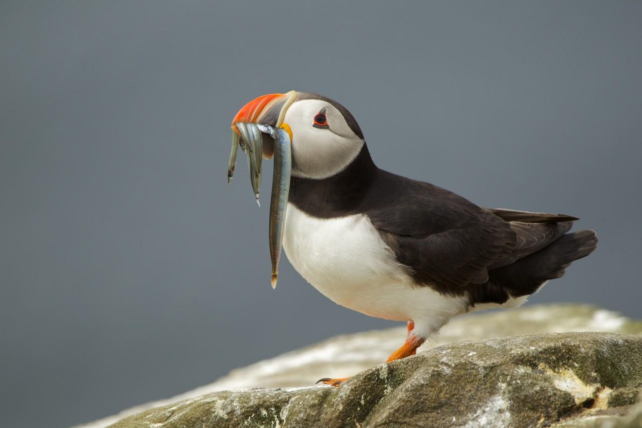 Pianeta terra sos uccelli marini - Uccelli che sbattono contro le finestre ...