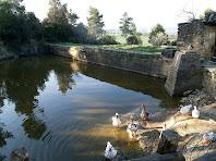 La bassa per regar els horts del Canadell