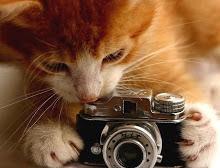 Veja mais fotos em uma única página!