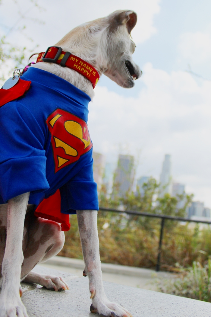 Superman Dog Halloween Costume