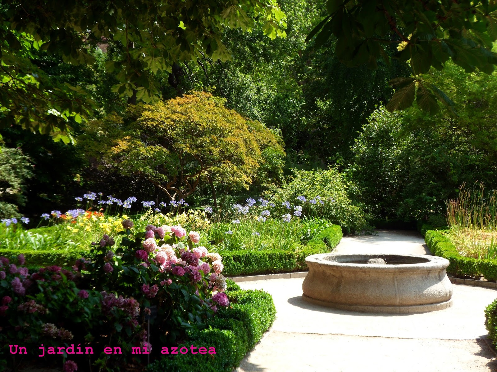 Un jard n en mi azotea dibujando en el real jard n for Jardin botanico cursos
