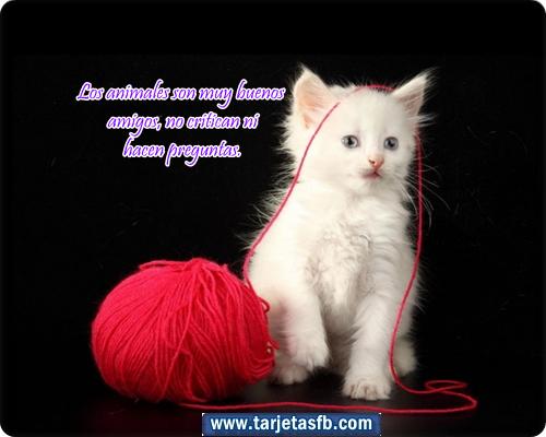Amor y Amistad: Tarjetas de gatos con frases de amistad para facebook