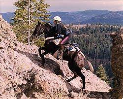 horse adventure story