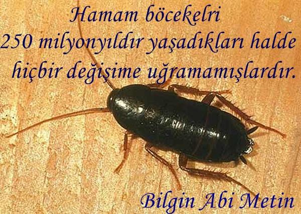 oryantal_hamam_bocegi.jpg