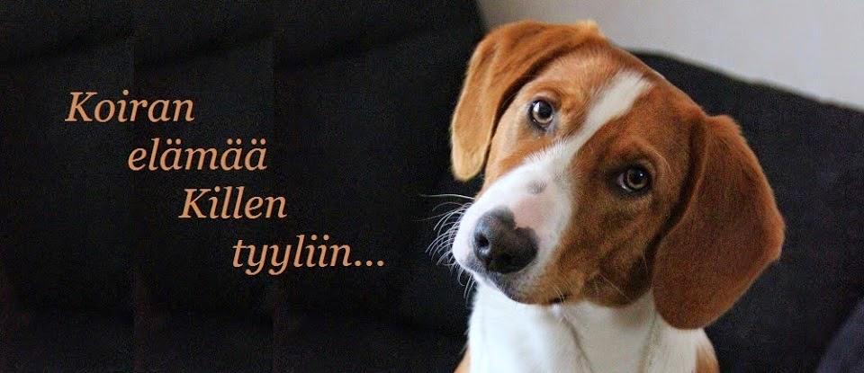 Koiran elämää Killen tyyliin