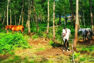 Aventuras a caballo, caballos