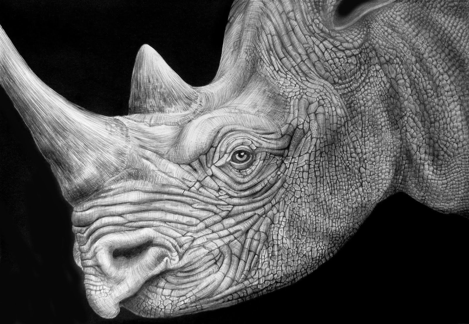14-Black-Rhino-Tim-Jeffs-All-Creatures-Great-and-Small-Ink-Drawings-www-designstack-co