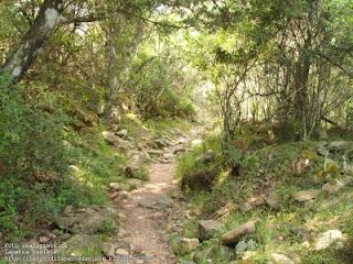 Riserva Naturale di Monte Arcosu - Uta (Sardegna)