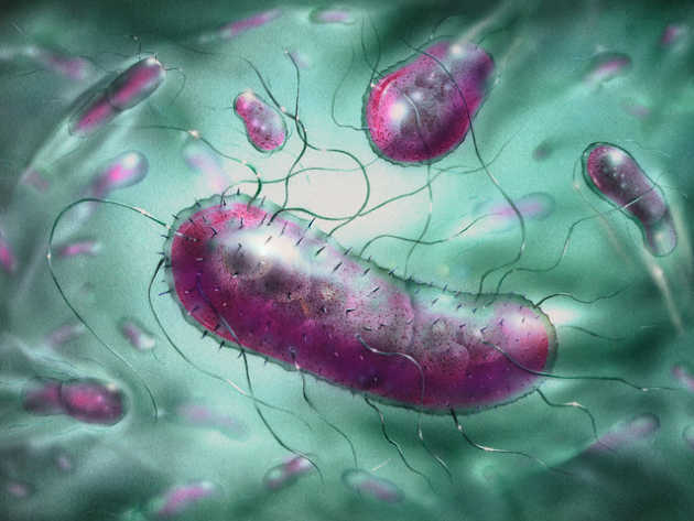 an analysis of the contamination of water and the bacteria escherichia coli Escherichia coli and fecal-colbform bacteria as indicators of recreational water quality by donna s francy, donna n myers, and kevin d metzker.