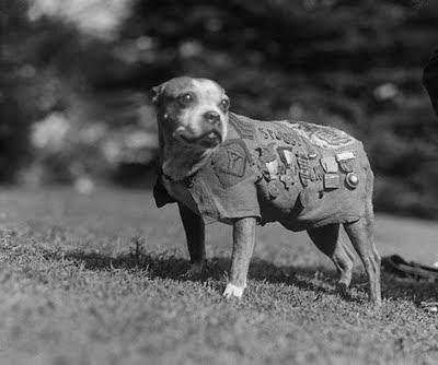 Perro+guerra Mi vida, a través de los perros (LVI)