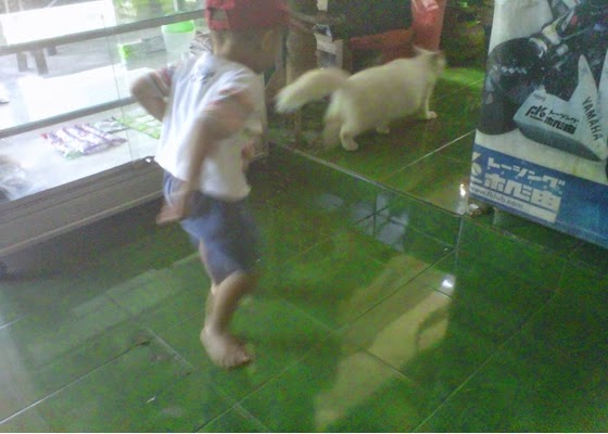 +Foto lucu anak sedang mengejar kucing putih mulus