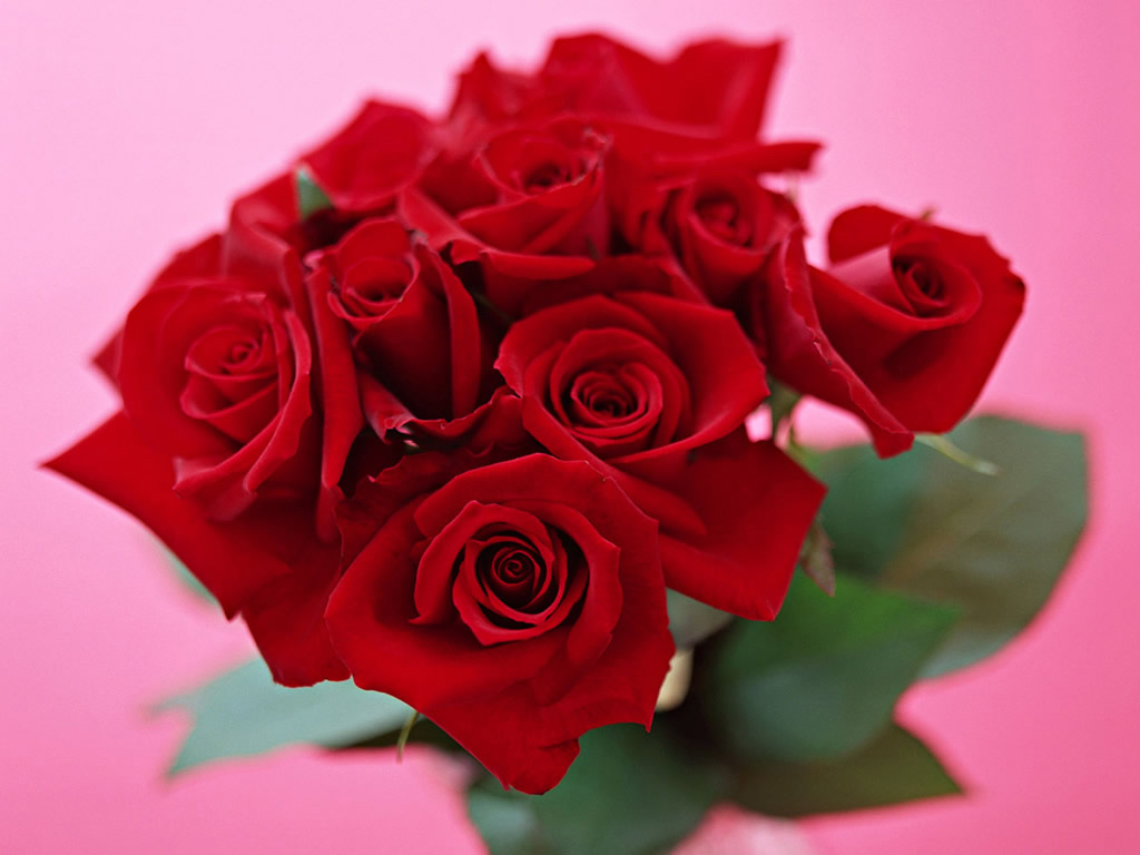 http://2.bp.blogspot.com/-FOX2uiMCa10/TzPNKEA5UAI/AAAAAAAABww/_nYIFtRr8l4/s1600/red-rose-wallpaper.jpg