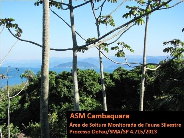 ASM Cambaquara