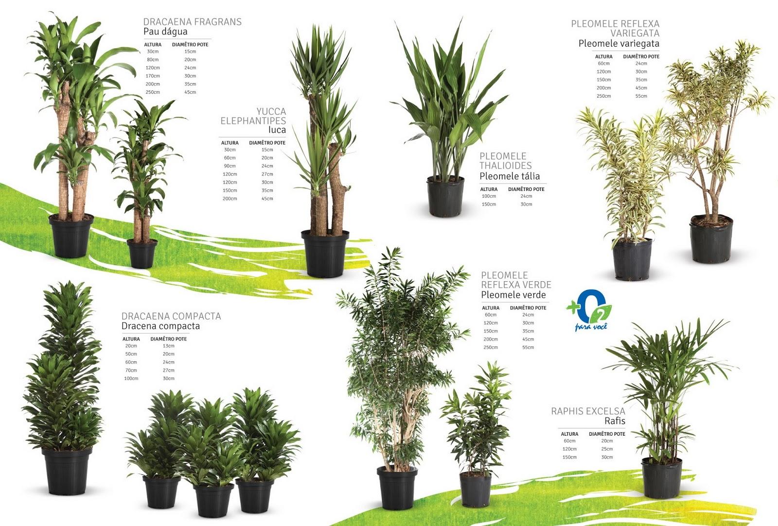 Catalogo mostra os principais produtos boa vista plantas for Plantas de interior ikea