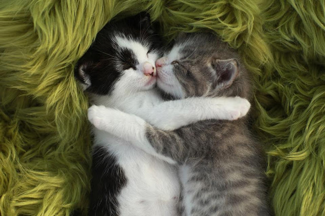 Little kittens sleeping together image