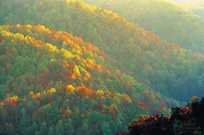 temperate deciduous forest The deciduous forest is a type of biome found throughout the eastern portion of north america, the middle of europe and in some parts of asia the average deciduous forest experiences.