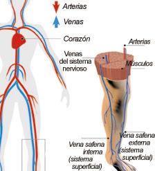 La ducha contrastante de varikoza las revocaciones