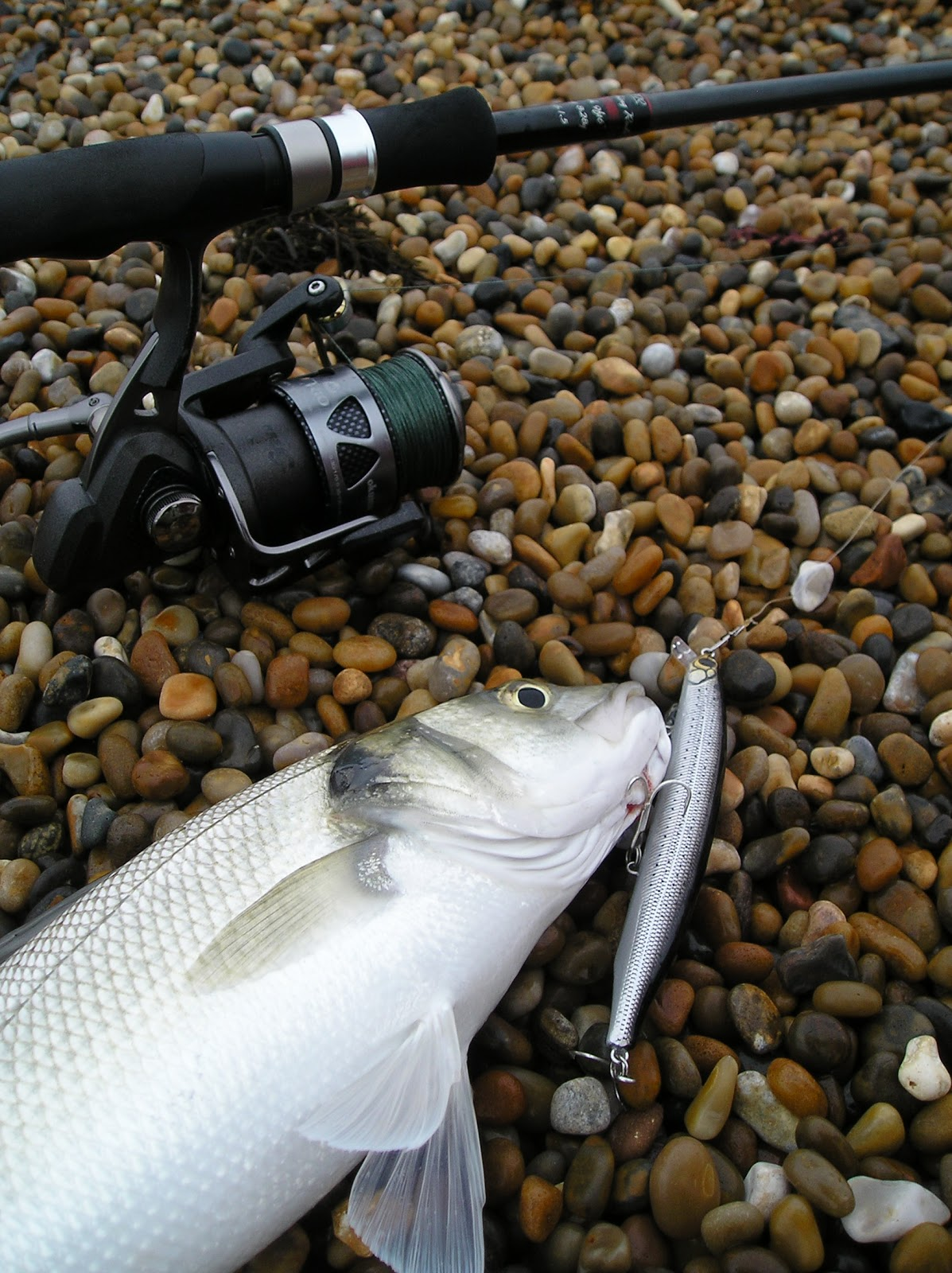 Lure addict dorset fishing rods 31 bass 10 macky 1 for Expensive fishing poles