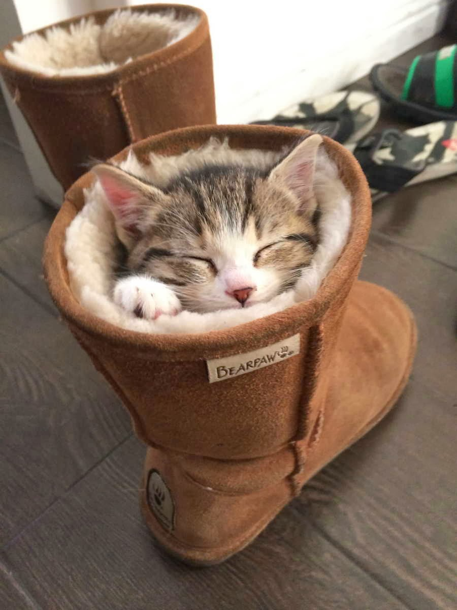 Funny cats - part 83 (40 pics + 10 gifs), cat pics, kitten falls asleep in a boot