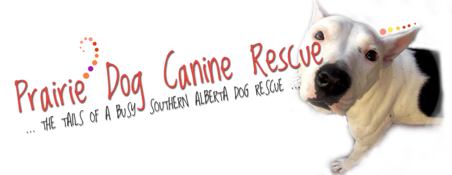 Prairie Dog Canine Rescue