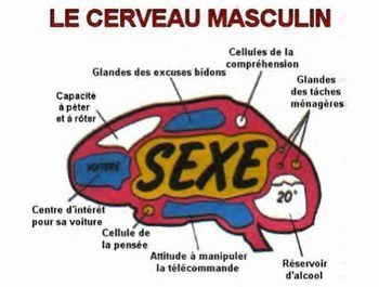 sex entre femme ils sont le sexe faible