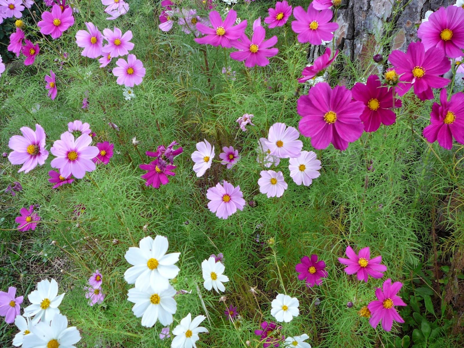 POTAGER SUR BUTTES: Les fleurs au potager