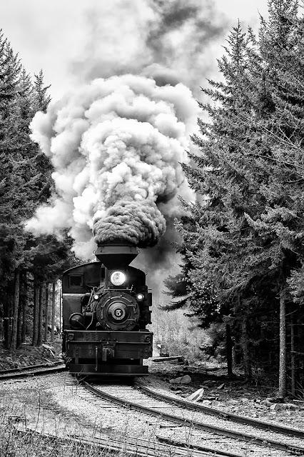 Shay #5 At Cass Scenic Railway