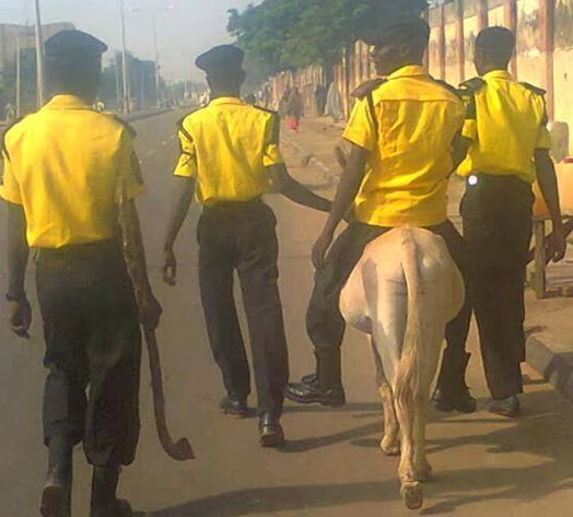 donkey arrested in kano