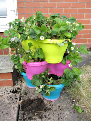 strawberry_planter