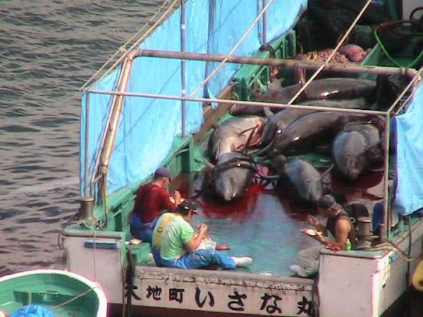 Pembantaian Lumba-lumba
