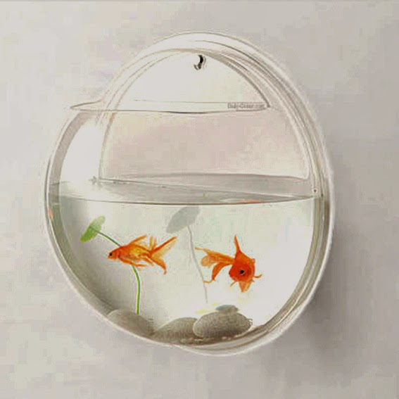 Amazing creative products wall mounted fish bowl for Wall fish bowl