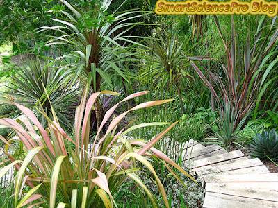 monocotyledonous plants