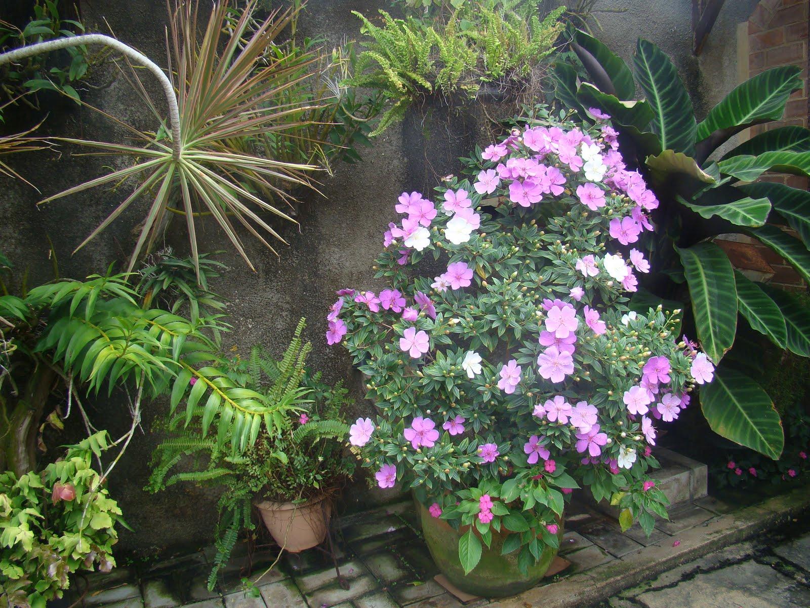 manaca de jardim em vaso : manaca de jardim em vaso:Outono no jardim da casa de minha mãe