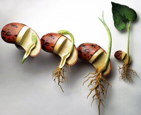 Pengertian, Ciri dan Struktur Tumbuhan Berbiji