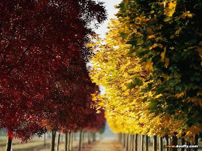 Summer, Winter, Spring, Autumn