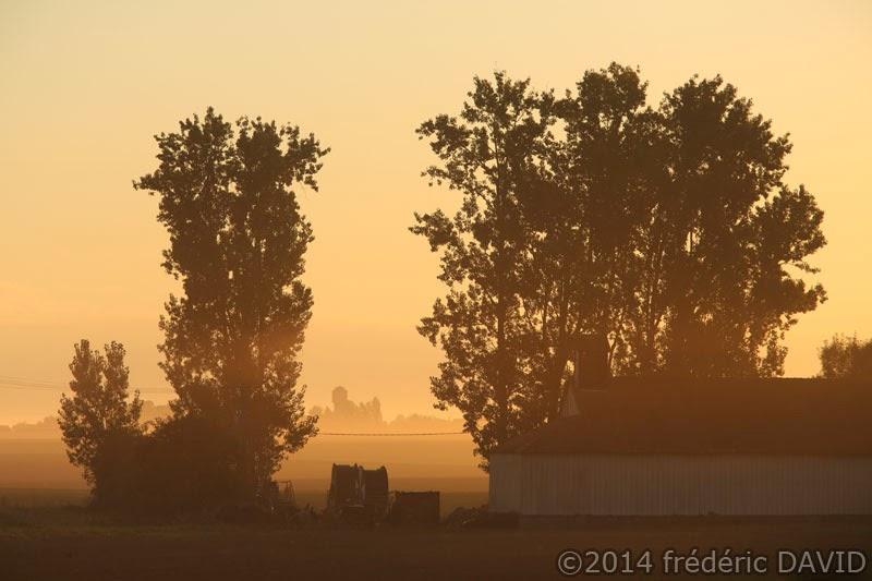 arbres campagne silhouettes contre-jour Seine-et-Marne