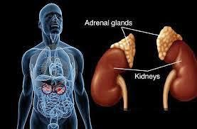 Cara Meneymbuhkan Kanker Adrenal