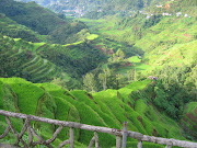 Banaue Rice Terraces in the Philippines
