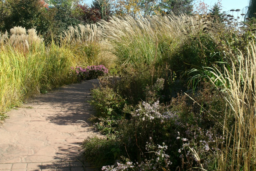Ornamental grasses at Toronto Music Garden Courante section by Paul Jung Toronto organic ecological gardening services