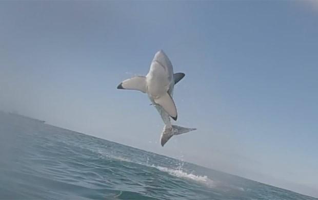 Resultado de imagem para Fotógrafo flagra imenso tubarão branco em salto incrível na África do Sul