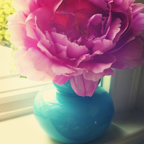 Design Darling Pink Peonies
