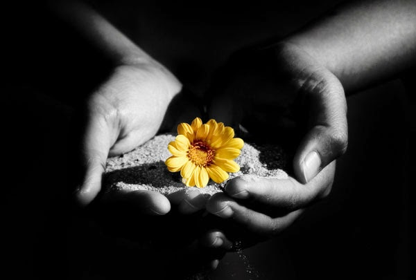 Diario di una ragazza indaco parabola sul fiore d oro for Donare un giardiniere