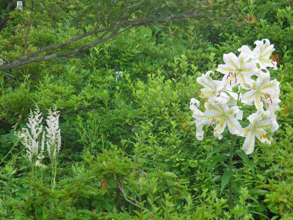 私の近況(田舎暮らしでブログ作成の仕事)Blog(ブログ)の花