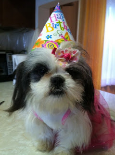 Pet Blogs United Gracie Lu The Shih Tzu Weekly Featured Blogger