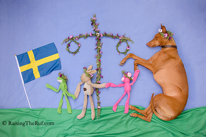 glad midsommar happy midsummer dog