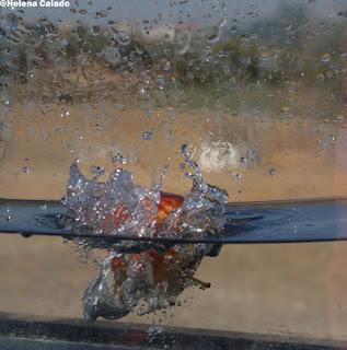 fotografia alta velocidade de uma maça