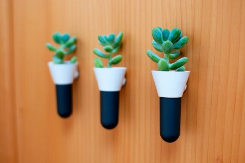 diseño con cactus
