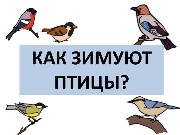 Презентация Как зимуют птицы Это интересно  презентация Как зимуют птицы