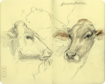 Dairy Cow sketch Royal Winter Fair Shannon Reynolds 2012